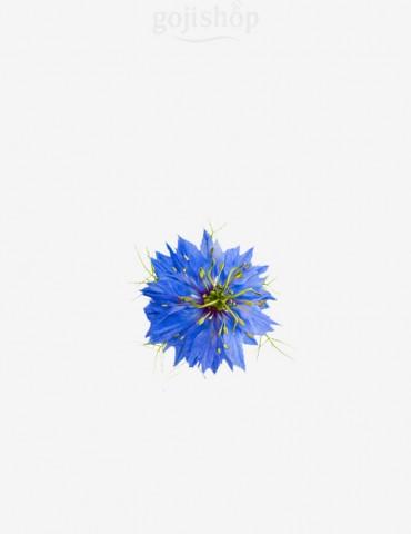 Fiore di cumino nero